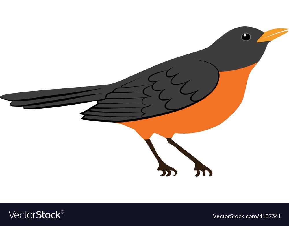Robin bird vector | Price: 1 Credit (USD $1)