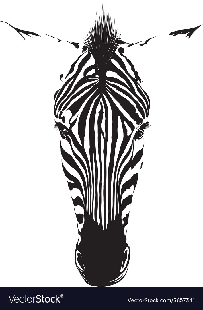 Zebra head vector | Price: 1 Credit (USD $1)