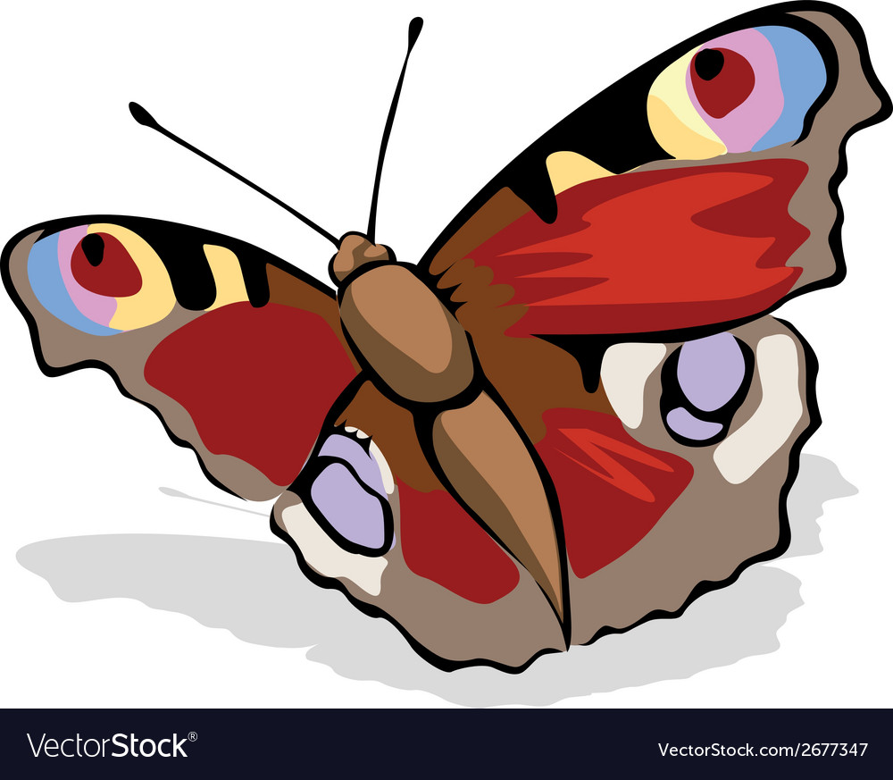 Butterfly peacock eye vector | Price: 1 Credit (USD $1)
