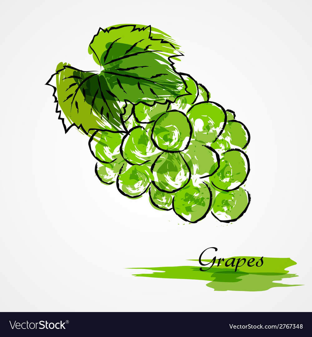 Green grapes vector | Price: 1 Credit (USD $1)