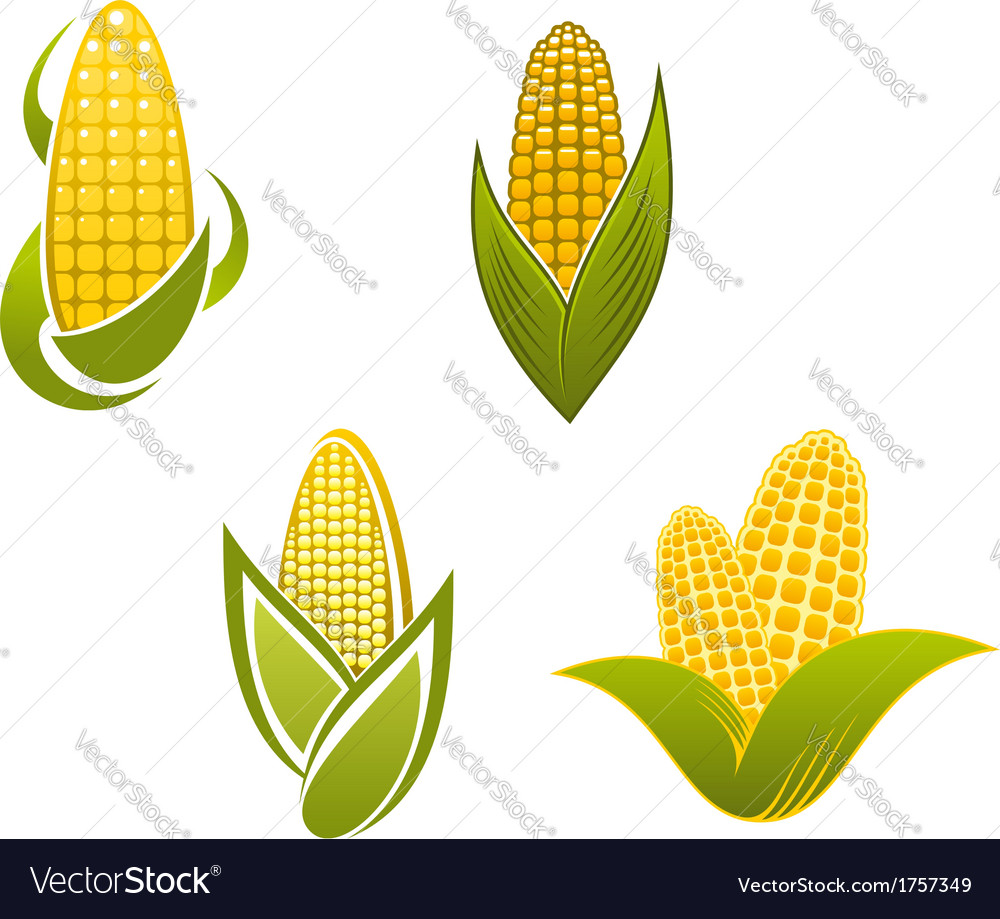 Yellow corn icons and symbols vector | Price: 1 Credit (USD $1)