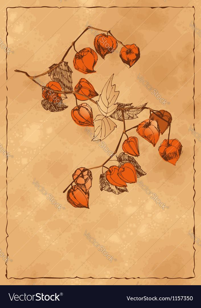 Autumn background with orange physalis vector | Price: 1 Credit (USD $1)