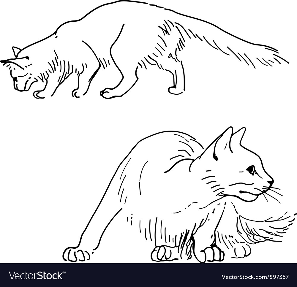 Set of sketch cats vector | Price: 1 Credit (USD $1)