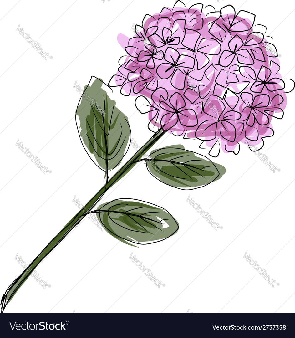 Sketch of hydrangea flower for your design vector