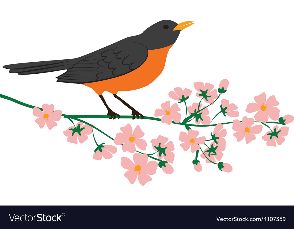 Robin bird vector | Price: 1 Credit (USD $1)