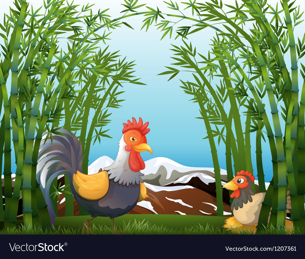 A rooster and a hen at the rainforest vector | Price: 1 Credit (USD $1)