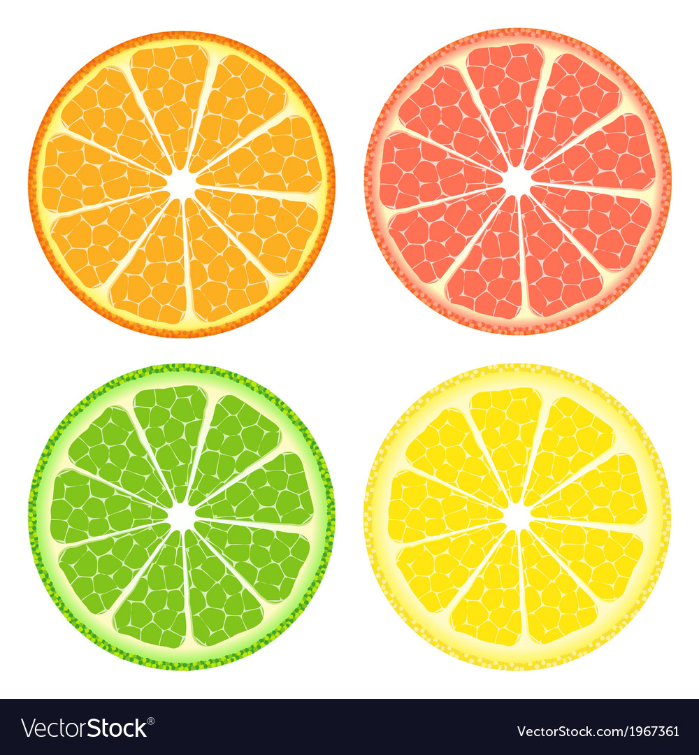 Citrus fruit set vector | Price: 1 Credit (USD $1)
