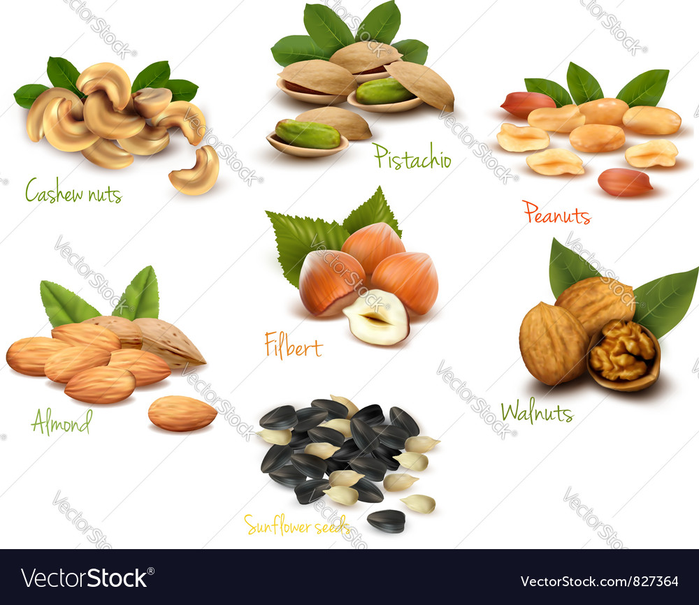 Fresh nuts set vector | Price: 1 Credit (USD $1)