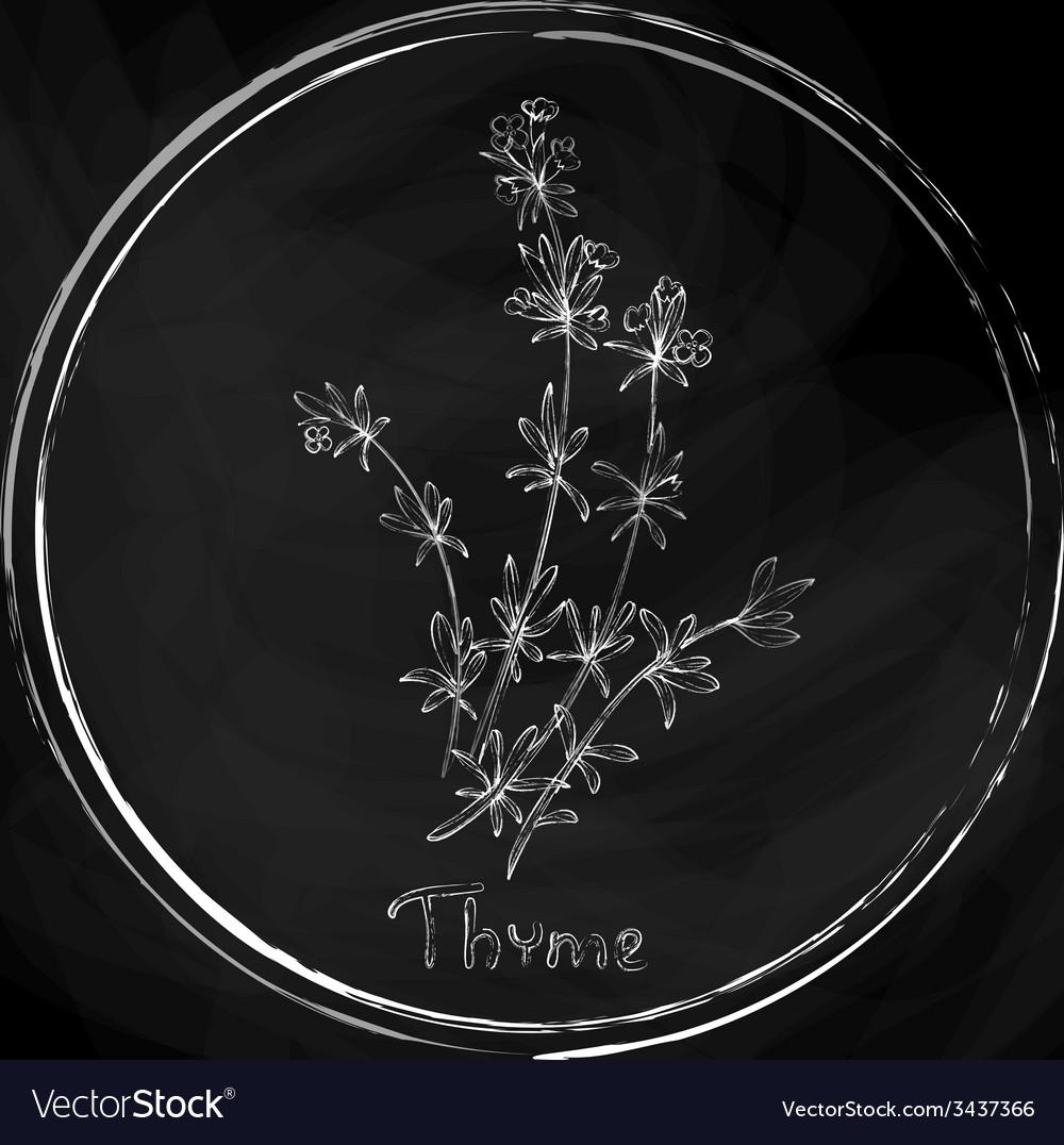 Dark thyme vector | Price: 1 Credit (USD $1)