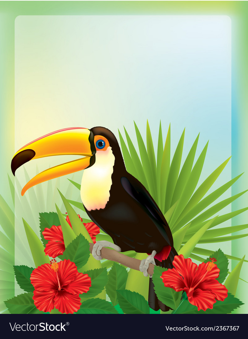 Tropical background with toucan vector | Price: 3 Credit (USD $3)