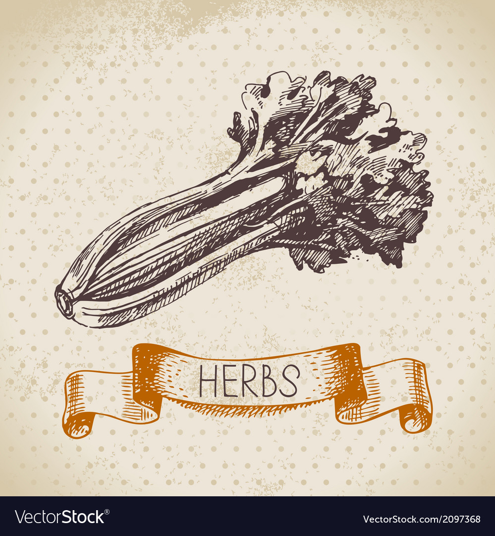 Kitchen herbs and spices vector | Price: 1 Credit (USD $1)
