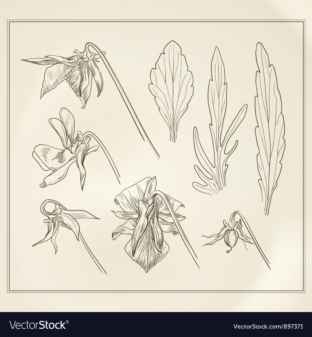 Botanical flowers vintage vector | Price: 1 Credit (USD $1)