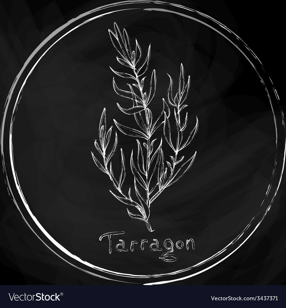Dark tarragon vector | Price: 1 Credit (USD $1)
