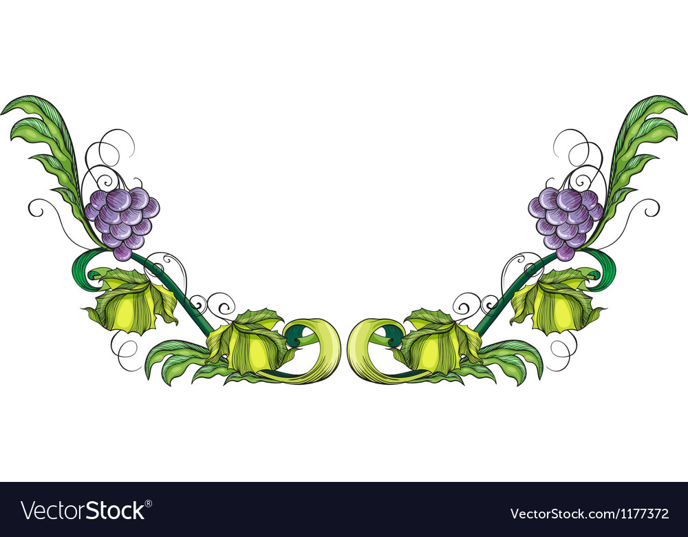 A grapevine plant vector | Price: 1 Credit (USD $1)
