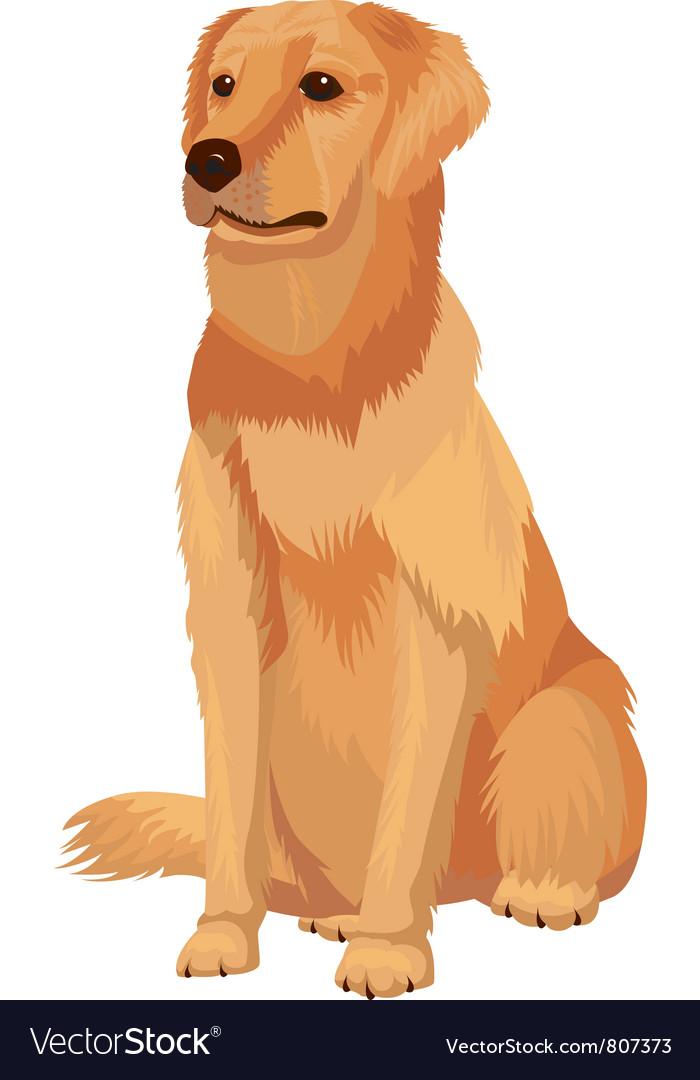 Labrador retriever dog breed vector | Price: 3 Credit (USD $3)