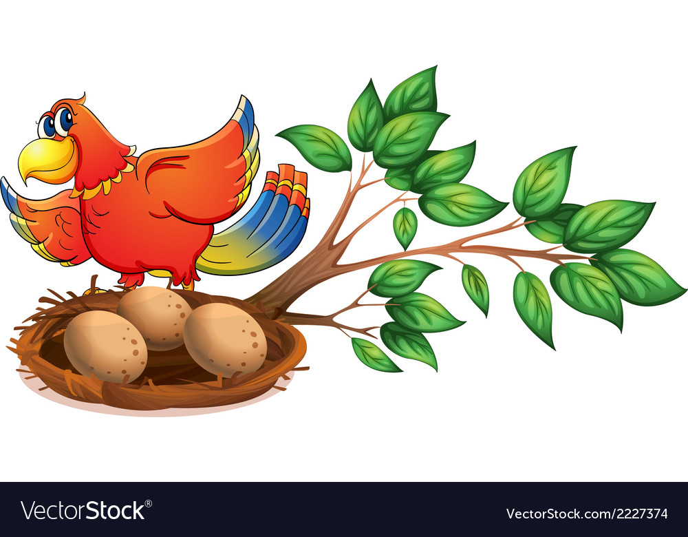 A colourful bird at the branch of a tree with a vector | Price: 1 Credit (USD $1)