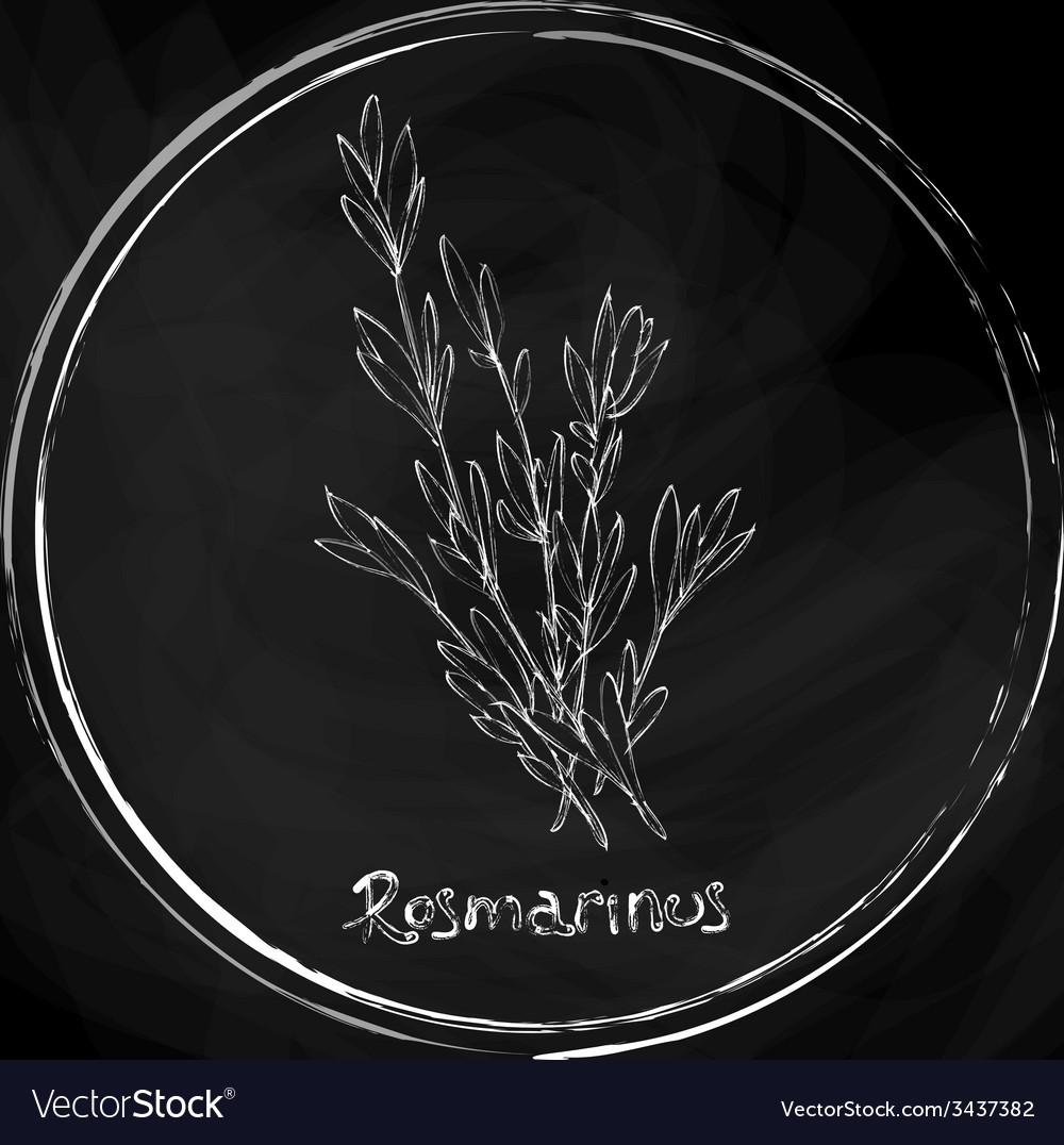 Dark rosemary vector | Price: 1 Credit (USD $1)
