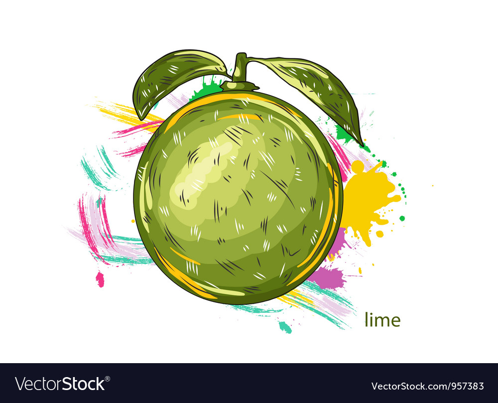 Lime with colorful splashes vector | Price: 1 Credit (USD $1)
