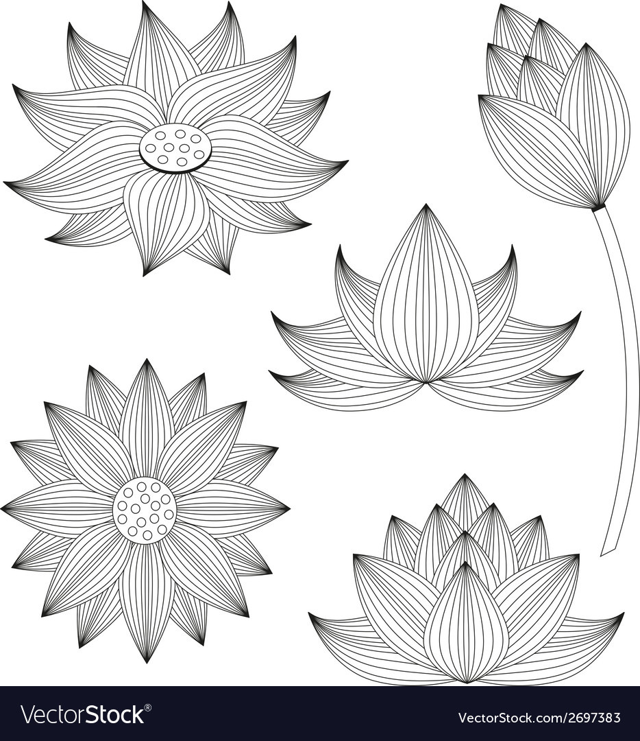 Lotus flower set on white background vector | Price: 1 Credit (USD $1)