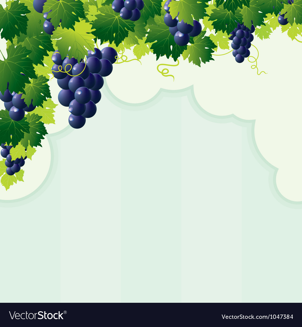 Cut vine strip vector | Price: 1 Credit (USD $1)