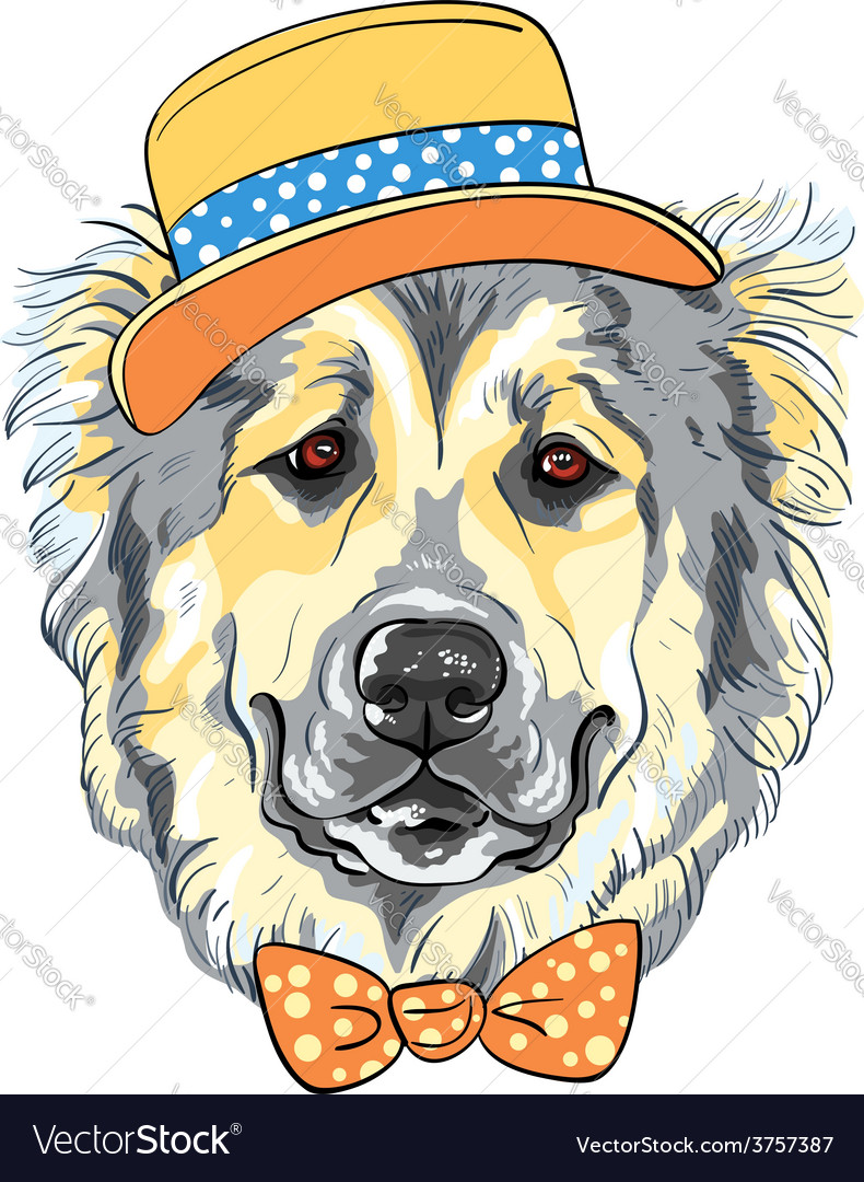 Dog caucasian shepherd dog breed in hat and vector | Price: 3 Credit (USD $3)