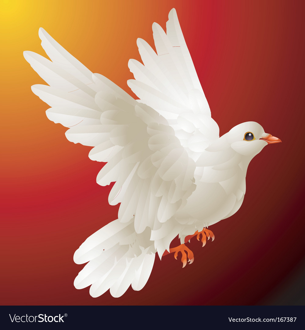White dove vector | Price: 3 Credit (USD $3)