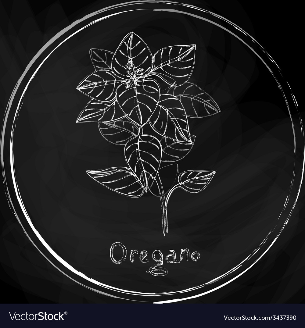 Dark oregano vector | Price: 1 Credit (USD $1)