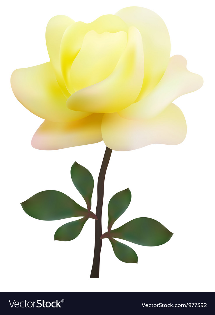 Yellow rose vector | Price: 1 Credit (USD $1)