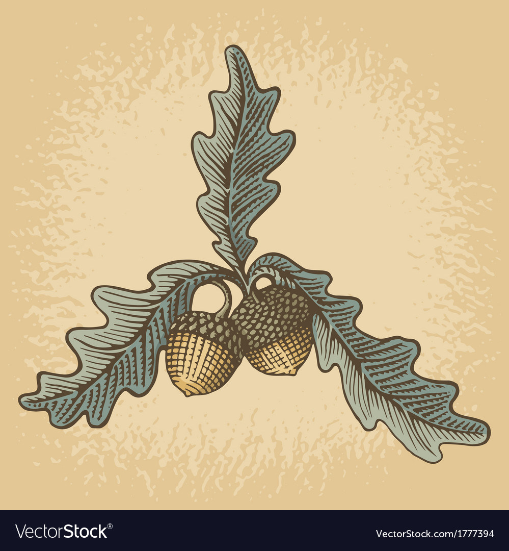 Acorn woodcut vector | Price: 1 Credit (USD $1)