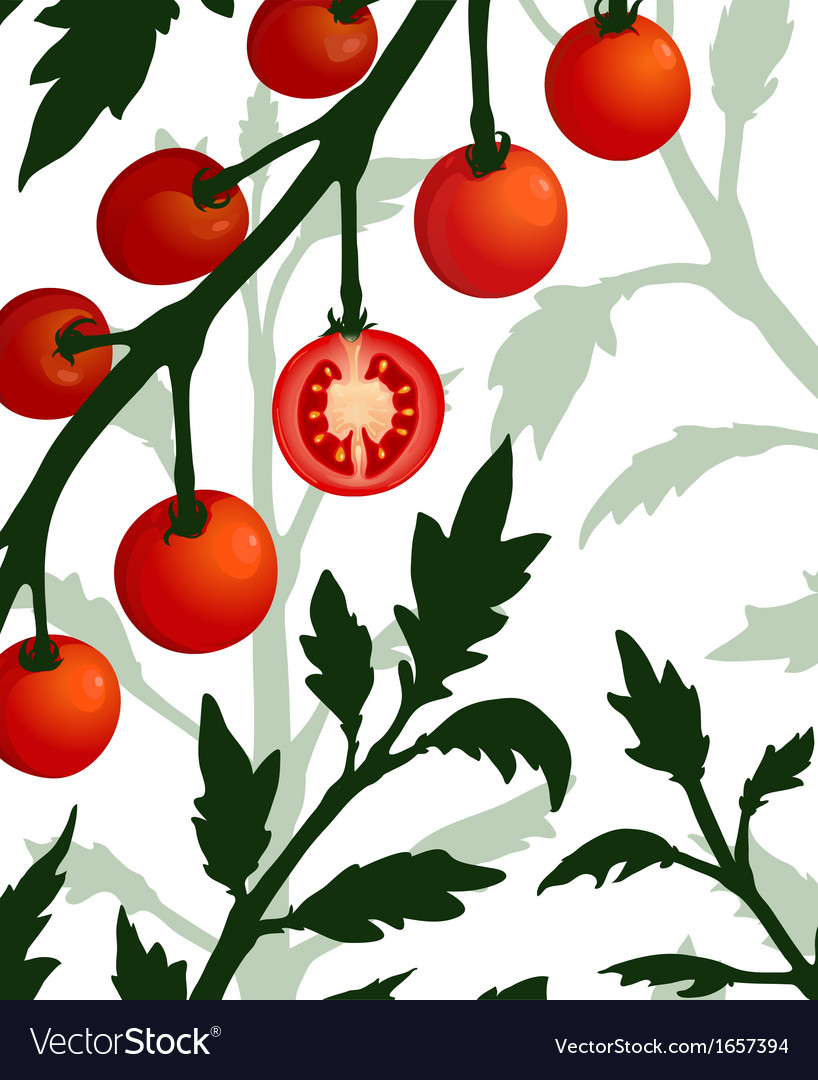 Botanical tomato branch with sliced section plant vector | Price: 1 Credit (USD $1)