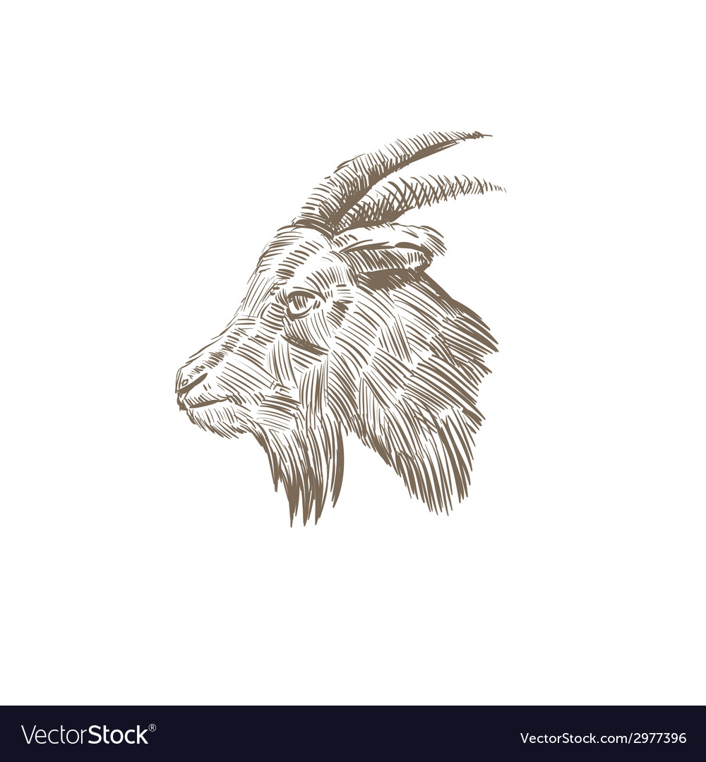 Goat head abstract isolated vector | Price: 1 Credit (USD $1)