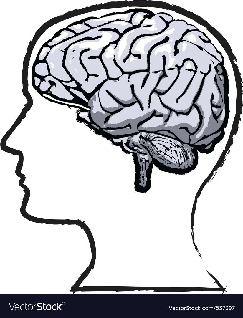 Humab brain vector | Price: 1 Credit (USD $1)