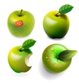 Set of green ripe apples four various view vector