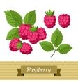 Set of various stylized raspberries vector