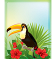 Tropical background with toucan vector