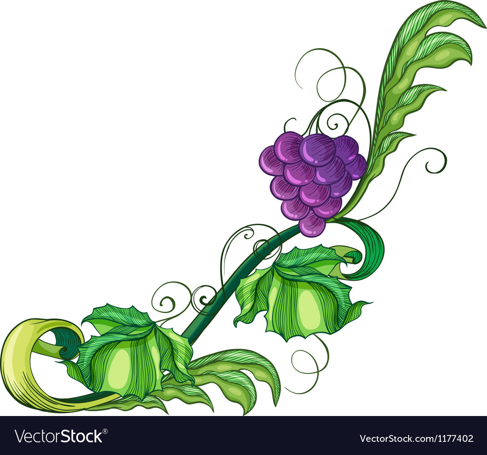 A vine fruit vector | Price: 1 Credit (USD $1)