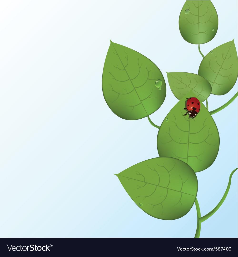 Funky ladybug vector   Price: 1 Credit (USD $1)