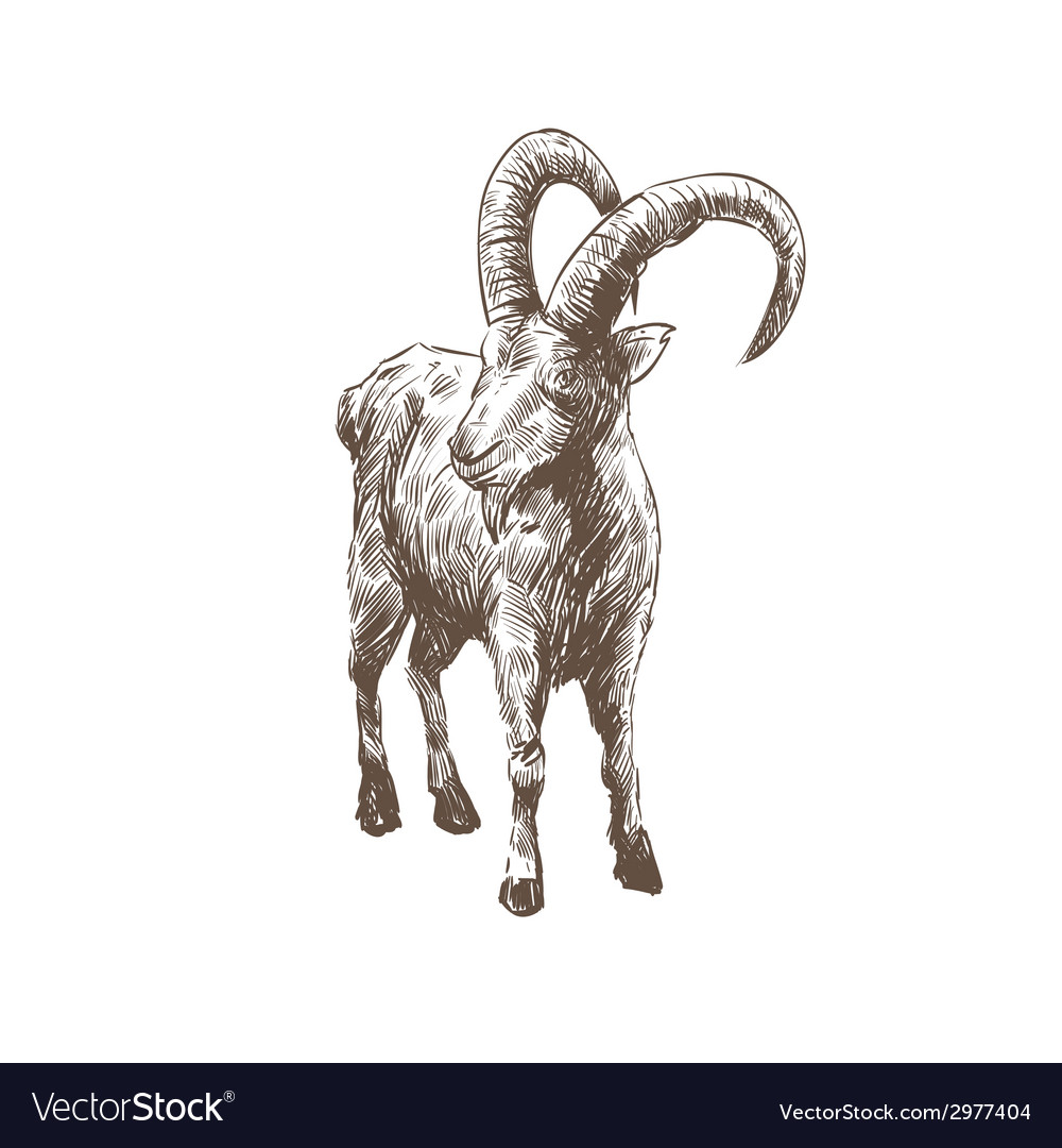 Goat abstract isolated vector | Price: 1 Credit (USD $1)