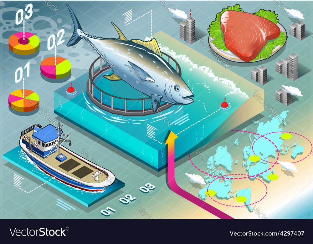 Isometric infographic of tuna breeding vector