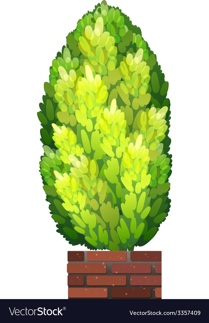 A tall decorative houseplant vector | Price: 1 Credit (USD $1)