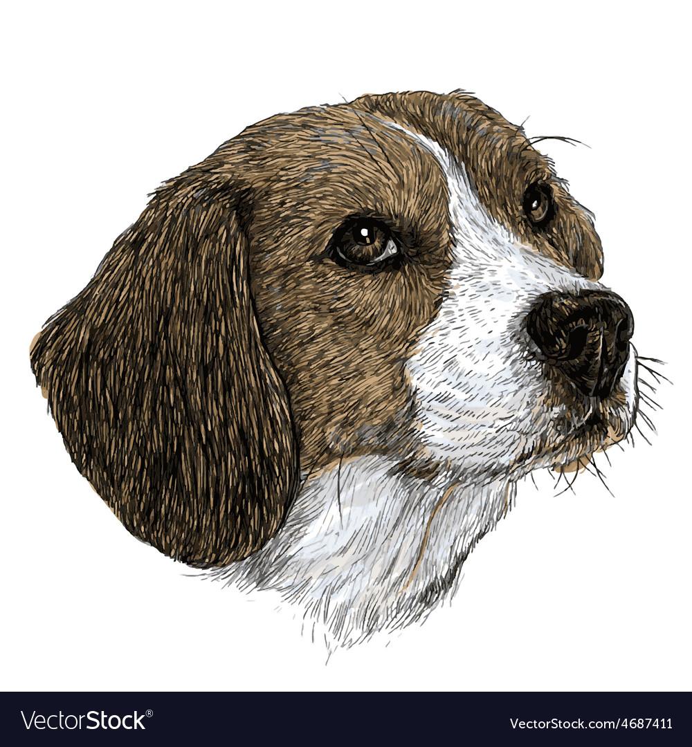 Beagle 02 vector | Price: 3 Credit (USD $3)