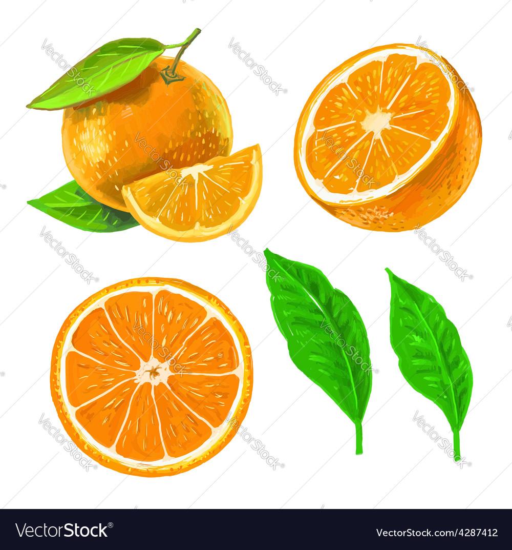 Picture of orange vector   Price: 1 Credit (USD $1)