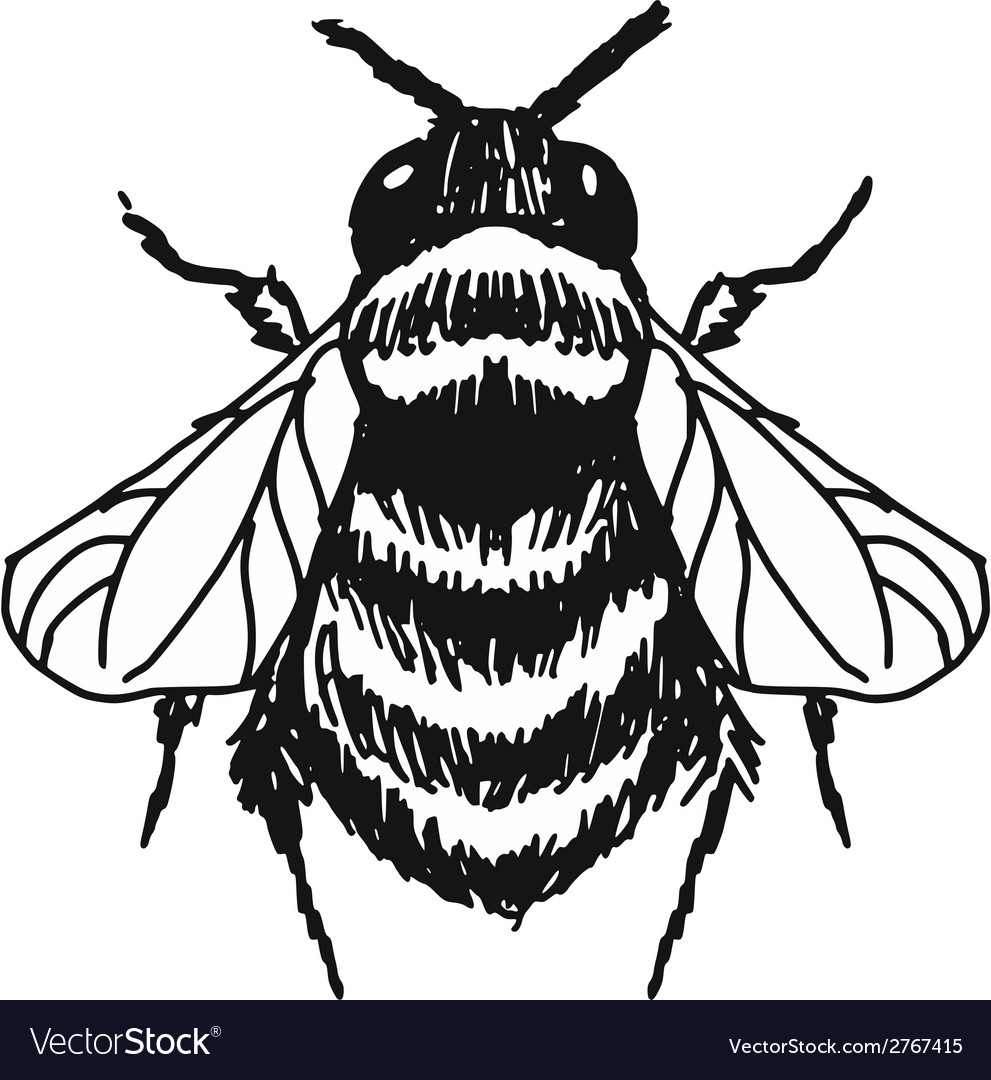 Bee vector | Price: 1 Credit (USD $1)