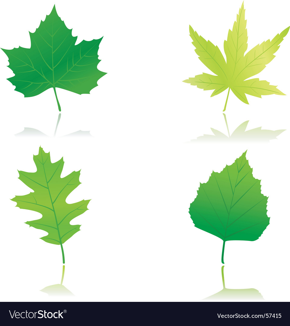 Green spring leaves vector | Price: 1 Credit (USD $1)