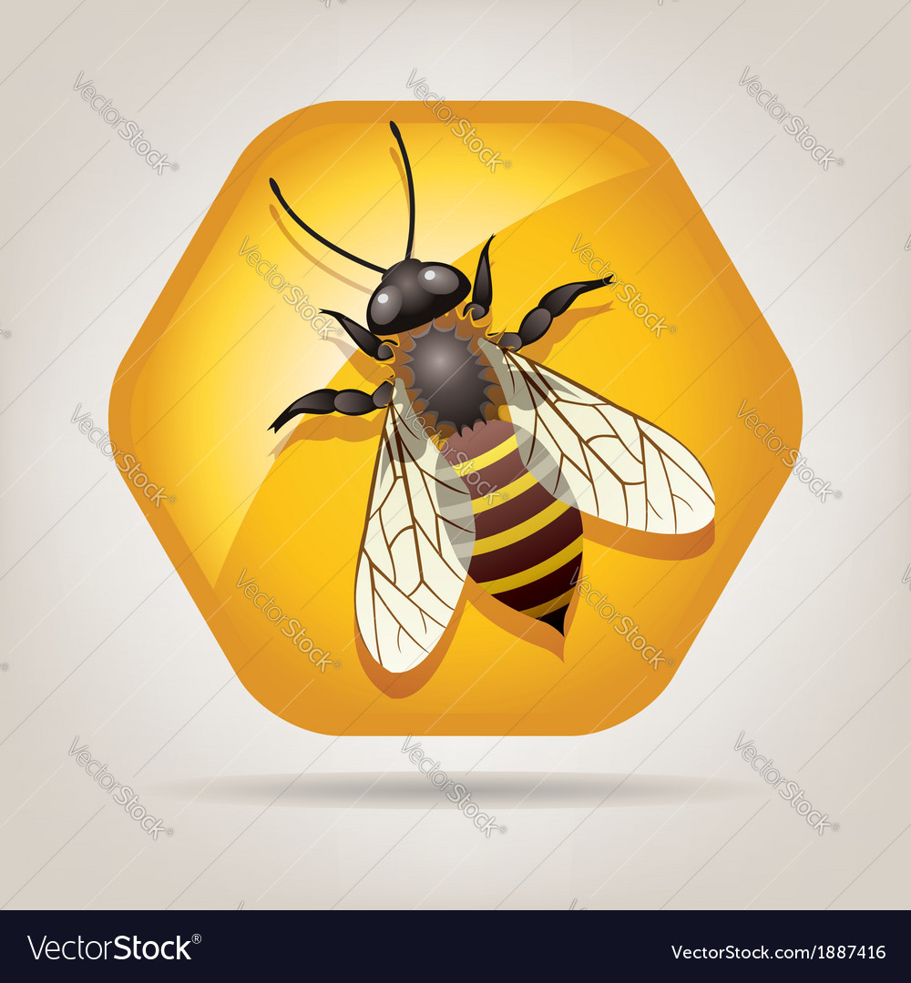 Bee on honeycell vector | Price: 1 Credit (USD $1)