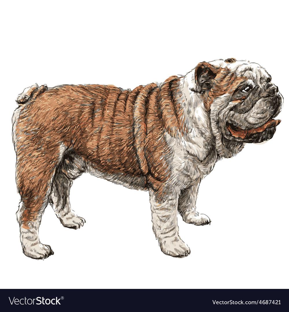 Bulldog 01 vector | Price: 3 Credit (USD $3)