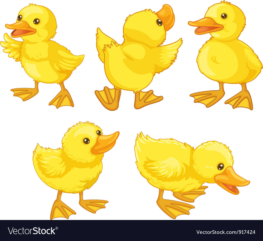 Duckling chicks vector