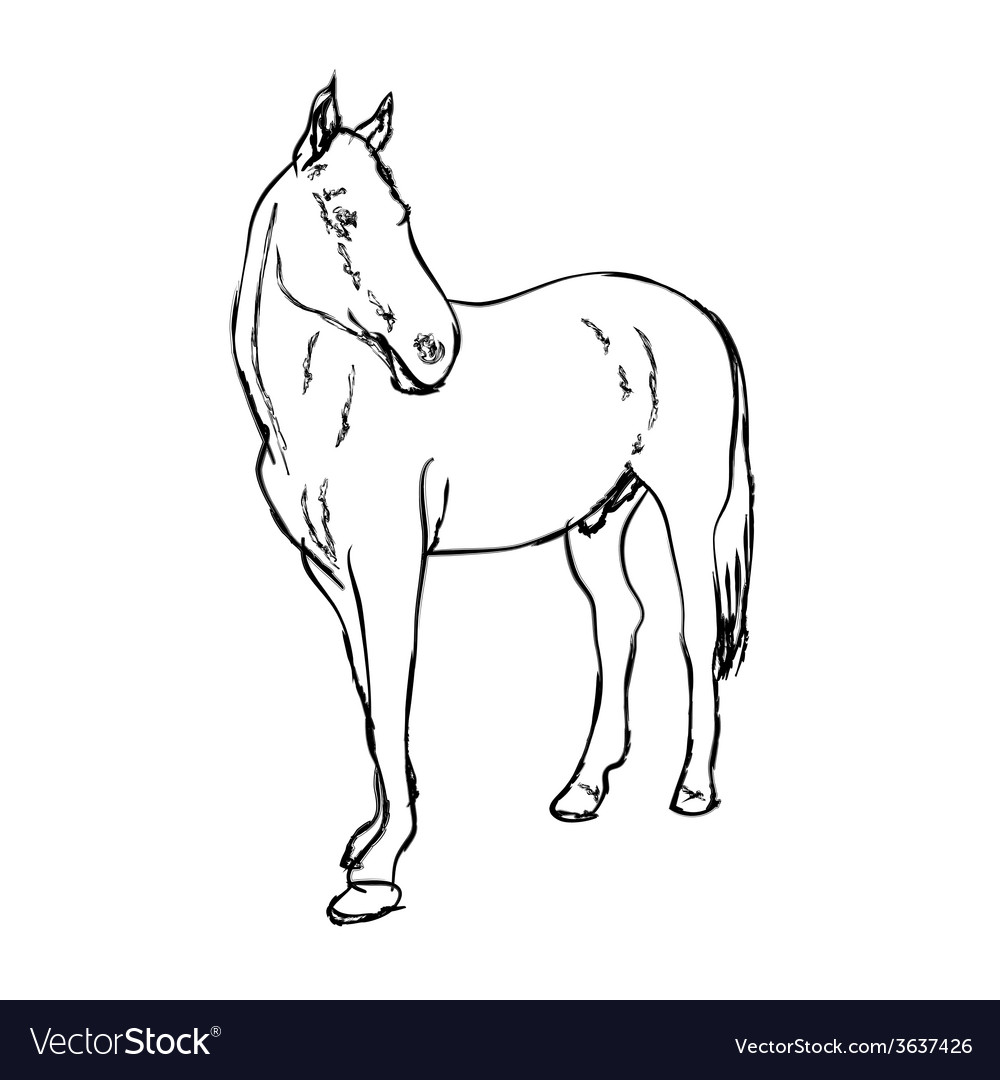 Elegance horse on white background vector | Price: 1 Credit (USD $1)