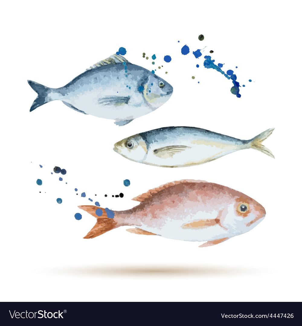 Watercolor fish vector | Price: 1 Credit (USD $1)