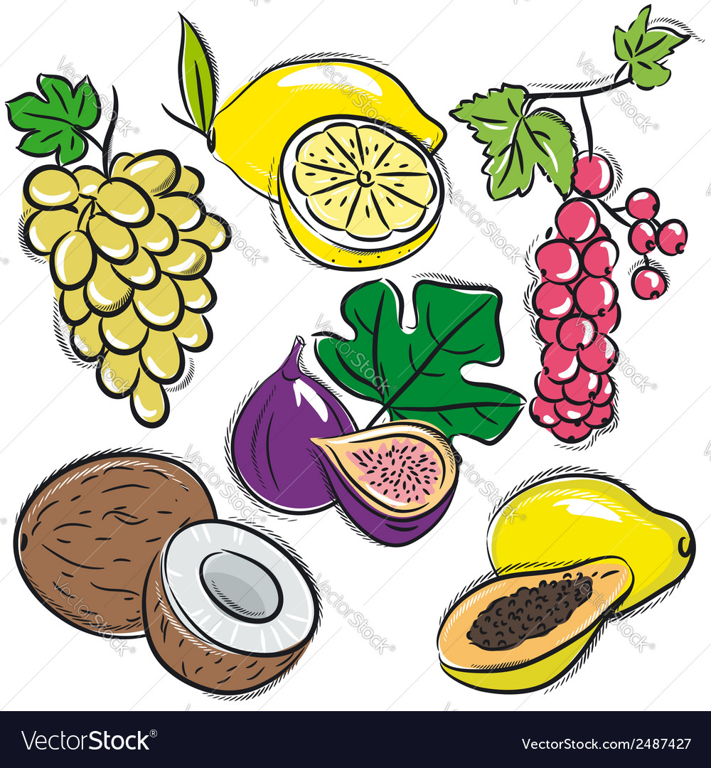 Set of fruits lemon grapes fig papaya coconut curr vector | Price: 1 Credit (USD $1)